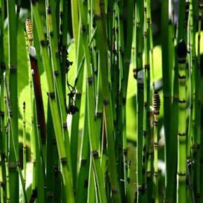 Bien être articulaire et osseux - Bambou et Prêle - Easynutrition.eu