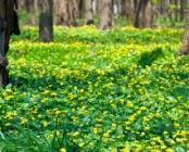 Surcharge de l'organisme - Tonifiant - Spring Easy Complex - Easynutrition.eu