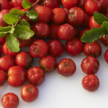 Anti-oxydant puissant qui offre un effet protecteur contre les radicaux libres - Vitamine C Forte - Easynutrition.eu