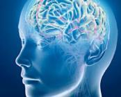 Compléments alimentaires pour la mémoire, la maladie d'Alzheimer, le déficit d'attention avec ou sans hyperactivité - Mémoire et concentration - Easynutrition.eu